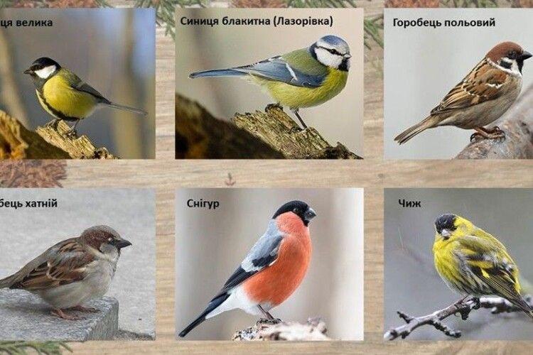 У національному заповіднику на Волині розповіли, як рахувати птахів