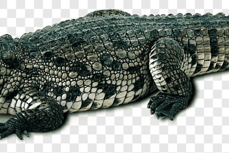 В Індонезії крокодил проковтнув 8-річного хлопчика