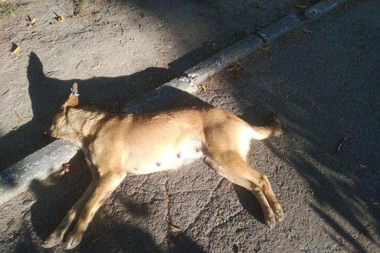 У Луцьку невідомі застрелили двох собак: шукають свідків злочину (Фото 18+)