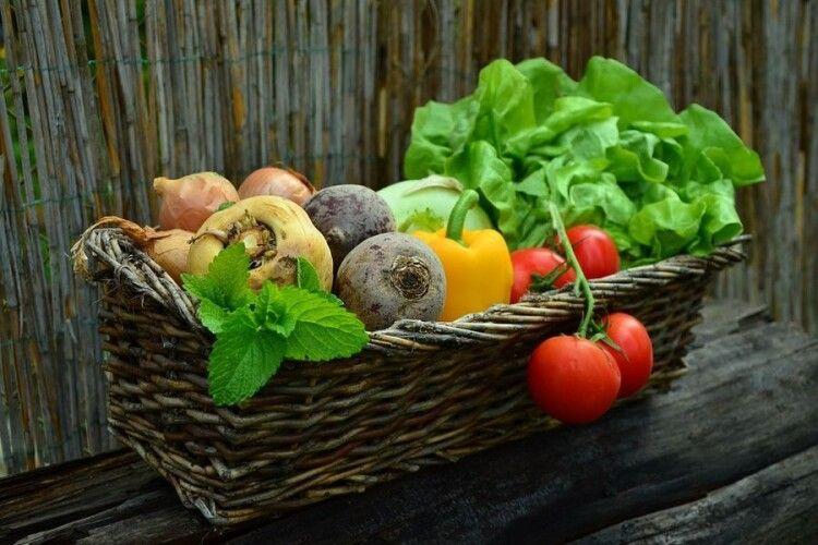 В Україні прогнозують високі ціни на ранні овочі