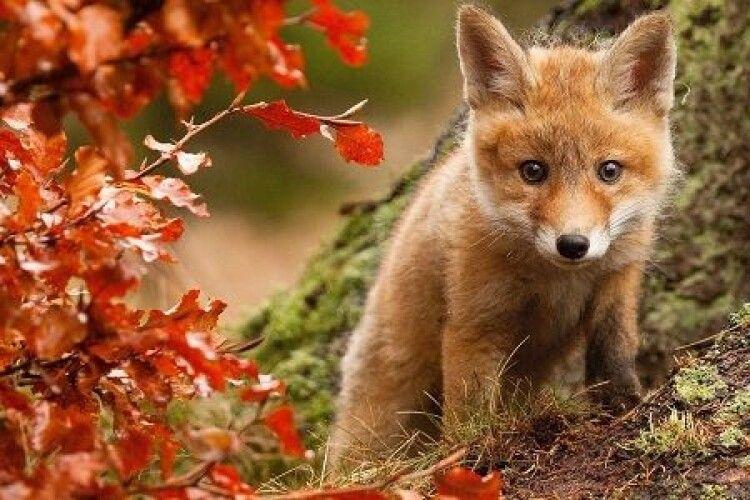 Погода на п'ятницю, 15 жовтня: волинянам обіцяють приємну осінню погоду