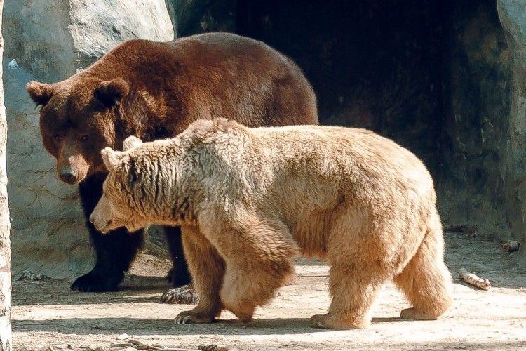 14 лютого пару закоханих пускатимуть у Луцький зоопарк на один квиток
