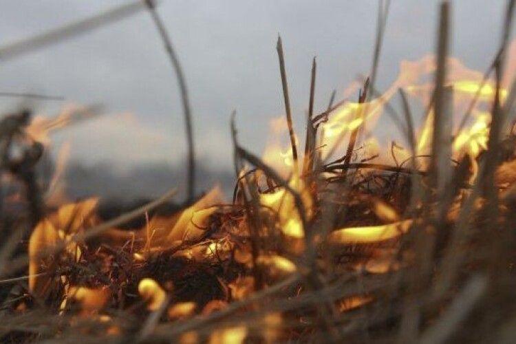 Волинських паліїв трави відтепер зможуть садити в тюрму (Відео)