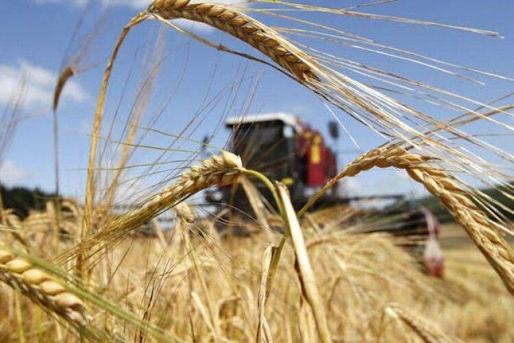 Україна цьогоріч націлилася на 100 млн тонн врожаю зернових і олійних культур