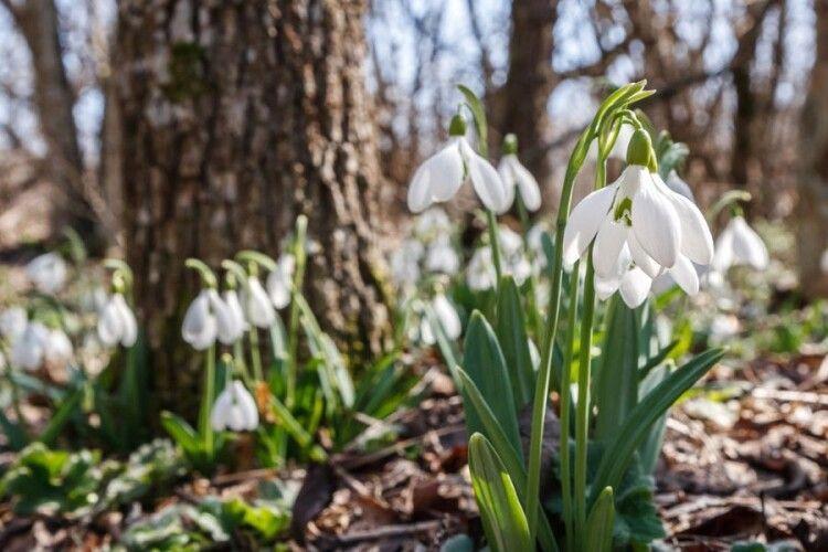 Погода на понеділок, 29 березня: вночі знову трохи приморозить, а вдень відпустить