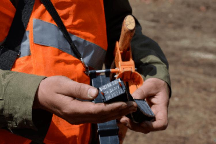 Лісокористувачі Волині запровадили електронний облік деревини