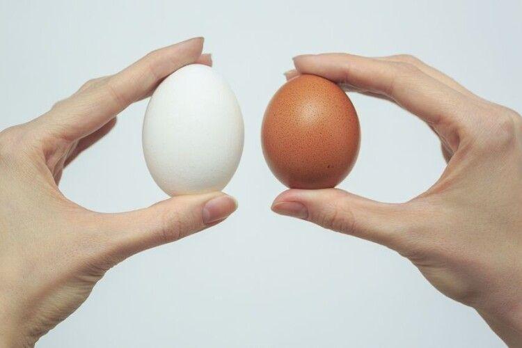 Українські яйця експортуватимуть до Албанії