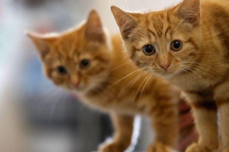 У Рівному живодери замучили до смерті кота