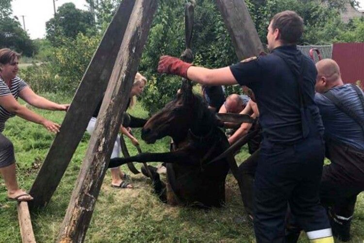 На батьківщині Зеленського витягали з колодязя жеребну кобилицю (Фото)