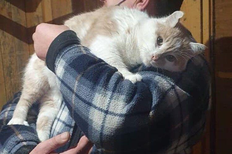Новорічне щастя вхопило за хвіст луцького кота Персика (Фото)
