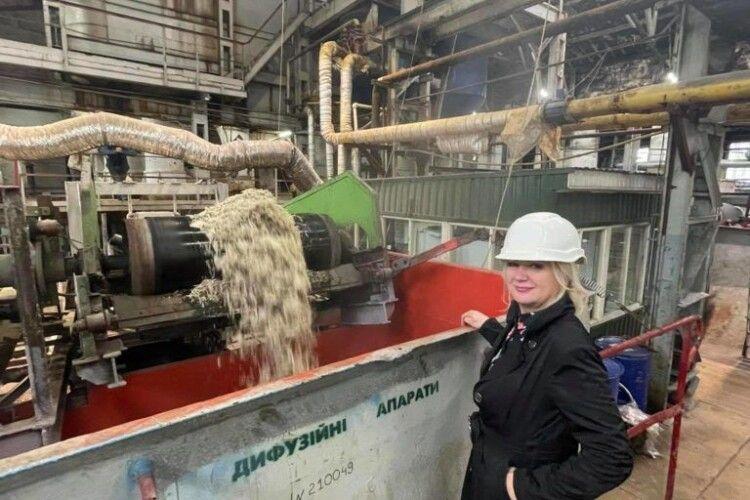 Цукристість цьогоріч вища: показали, як працює Гнідавський цукровий завод (Фото)