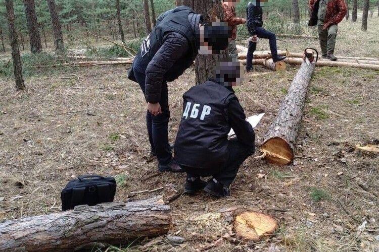 Поліцейських судитимуть за фабрикацію справи про незаконну вирубку лісу