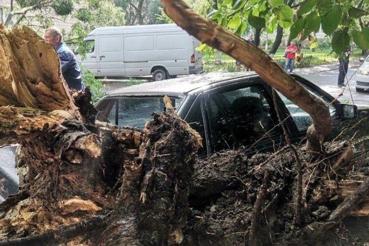 У Луцьку під час негоди на машину впало дерево: хто відповість