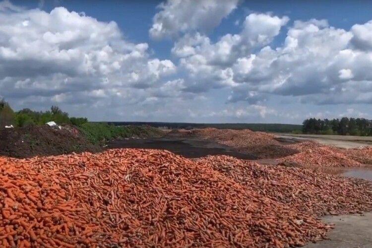 Український фермер викинув в полі кілька тонн моркви