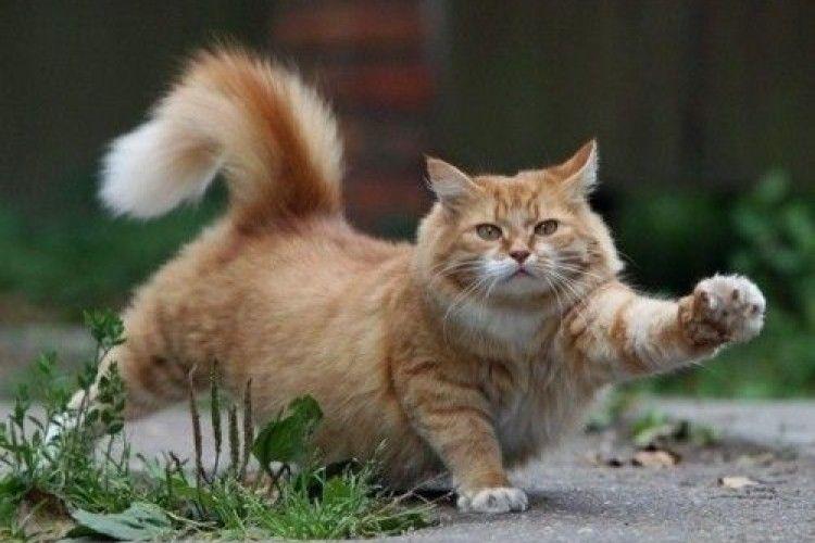 Кіт, який полюбляє красти білизну, посварив закохану пару