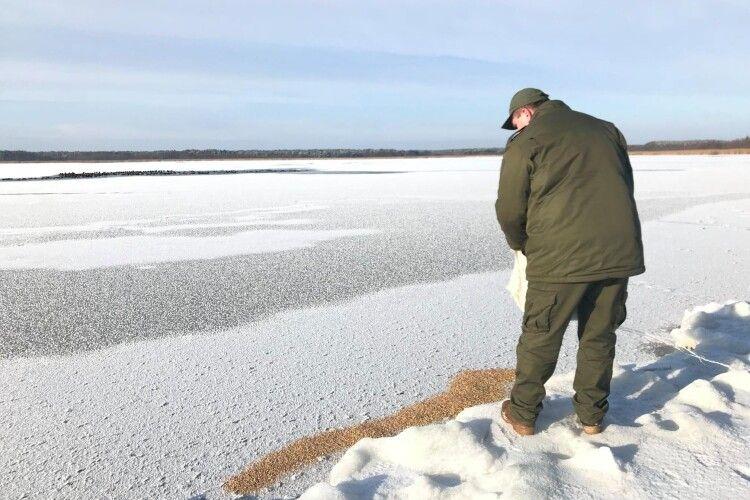 Як на Волині взимку підгодовують диких тварин і птахів (Фото)