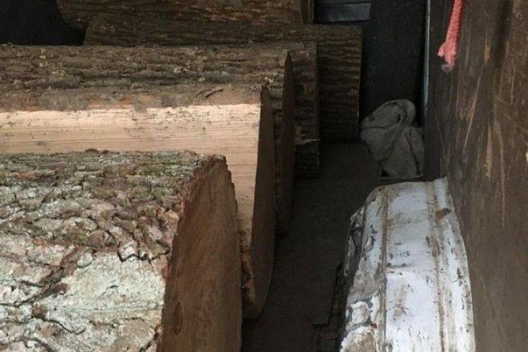 Волинські лісівники затримали лісових злодіїв