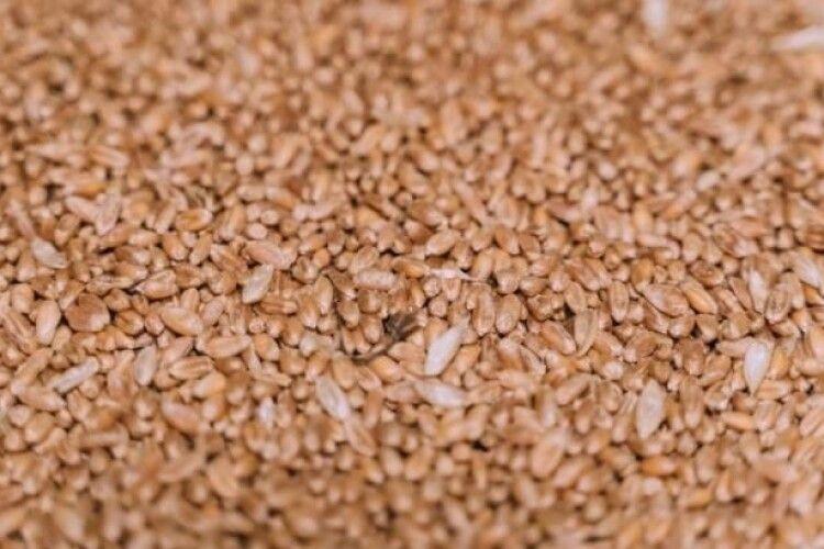 Україна вже експортувала понад 29 мільйонів тонн зернових