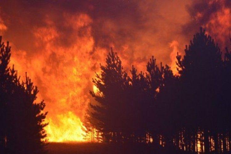 Студентів оштрафували на 15 мільйонів доларів за спалений ліс