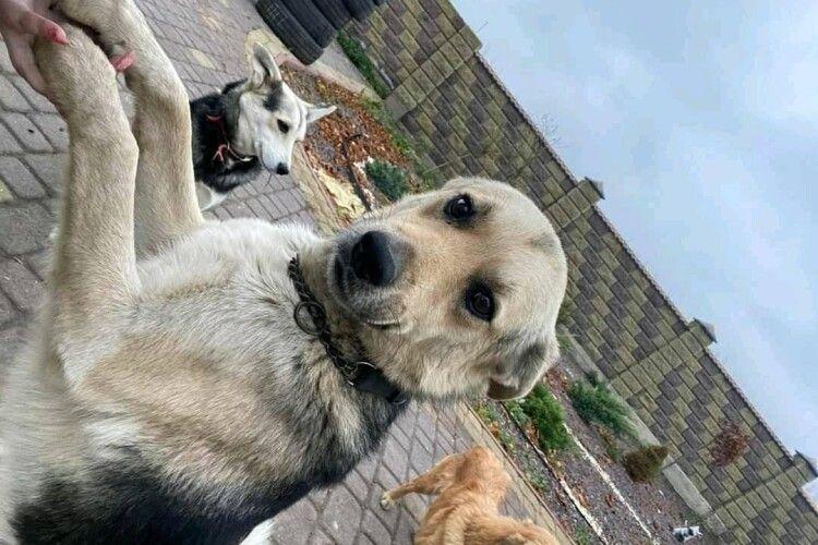 Лучанам показали, як нині живеться легендарному псу Баді (Фото)