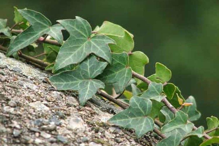 Скільки видів рослин пропонують охороняти на Волині?