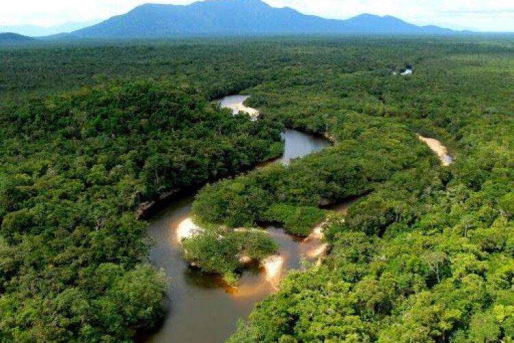 Науковець прогнозує перетворення амазонських лісів на посушливу місцевість до 2064 року