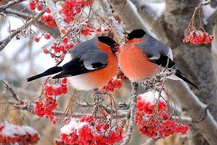 Погода на п'ятницю, 18 грудня: Сава справжньою зимою нас не порадує