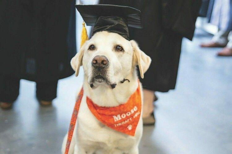 Собаку удостоїли вченого звання за допомогу в реабілітації людей