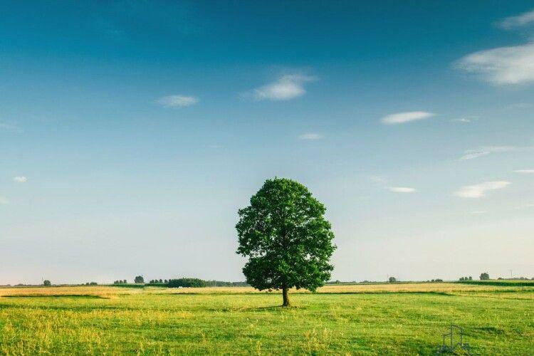 Прокуратура Волині наполягає на поверненні в державну власність 82 гектарів землі