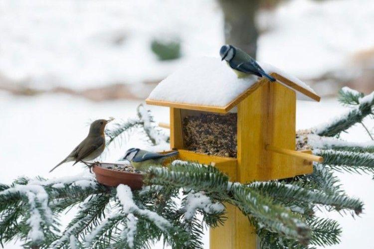 Школи Ківерцівського району одержали інструкції щодо облаштування пташиних їдалень