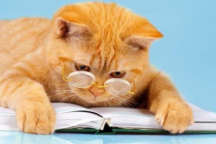 Волинян закликали брати приклад з котів і читати книжки (Фото)