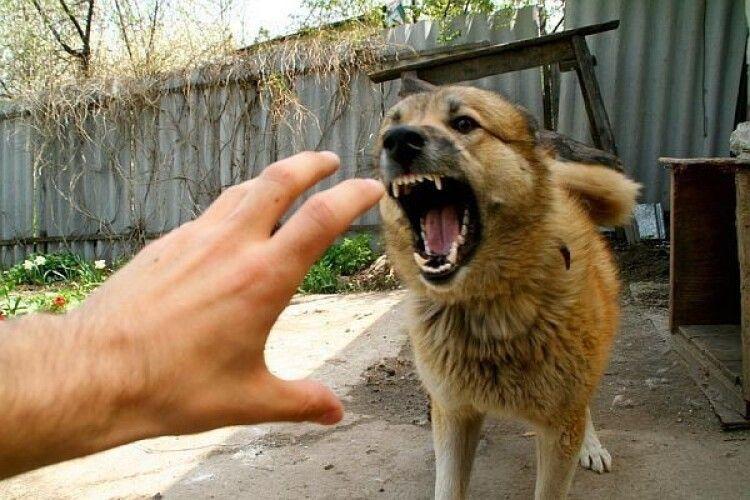 Чому і на кого собаки нападають частіше