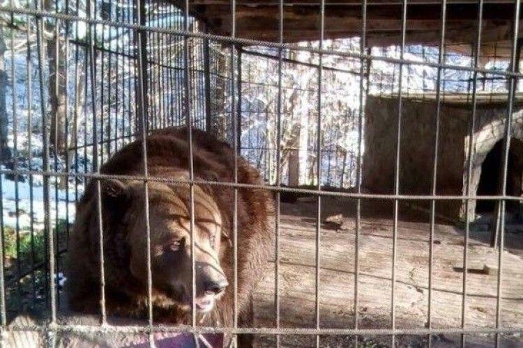 Активісти намагаються забрати бурого ведмедя з ресторану