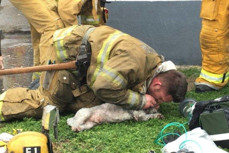 «О, Санта-Моніко!»: в американському місті пожежник врятував пса... штучним диханням (фото)