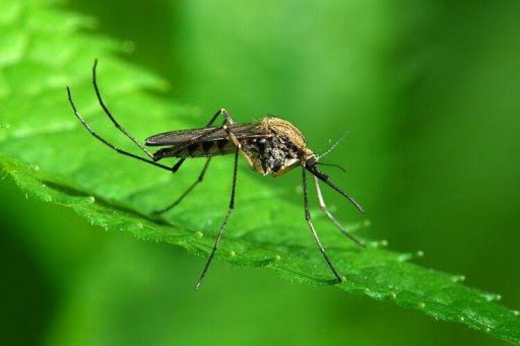 11 ароматів,  які вбивають комарів