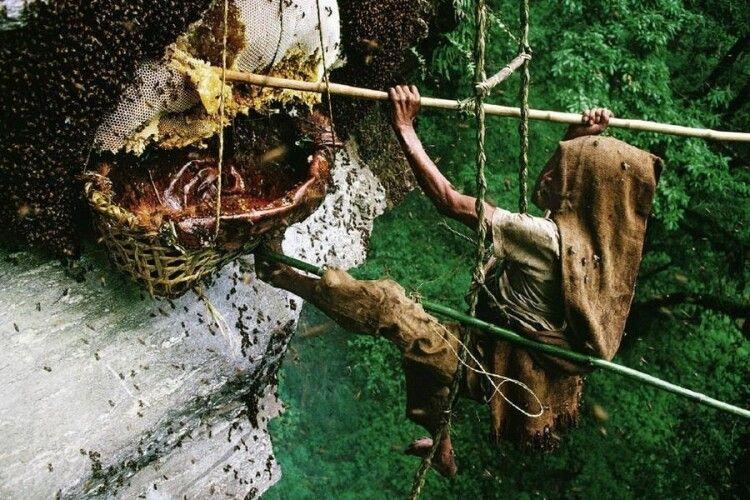 У Гімалаях селяни гинуть, добуваючи дикий мед у скелях, як і 8000 років тому