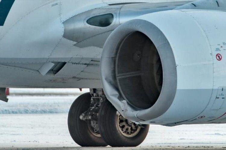 Boeing авіакомпанії Alaska Airlines збив ведмедя