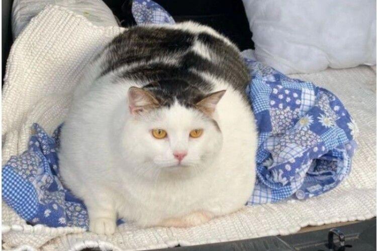 Кіт з Білорусії переважив українського рекордсмена Кекса аж на 7 кілограмів (Фото)