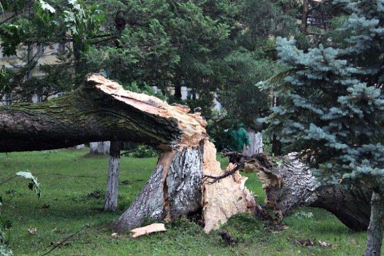 Дерево впало... і вбило грибника