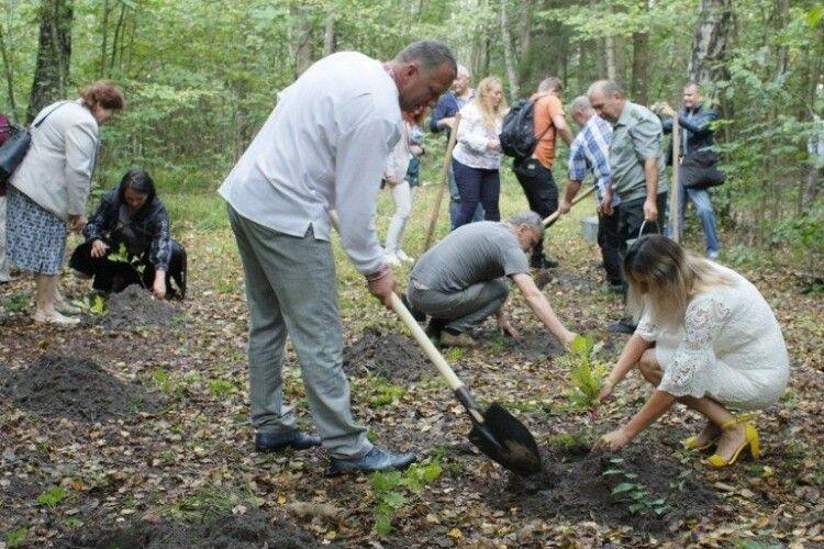 Письменники України продовжили традицію створення діброви біля Лесиного дуба в урочищі Нечимне