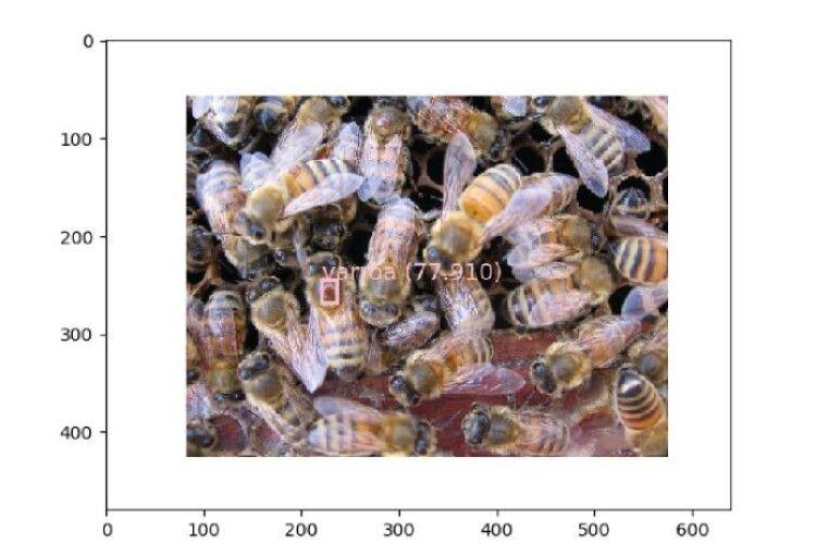 Винайшли програмне забезпечення для бджолярів