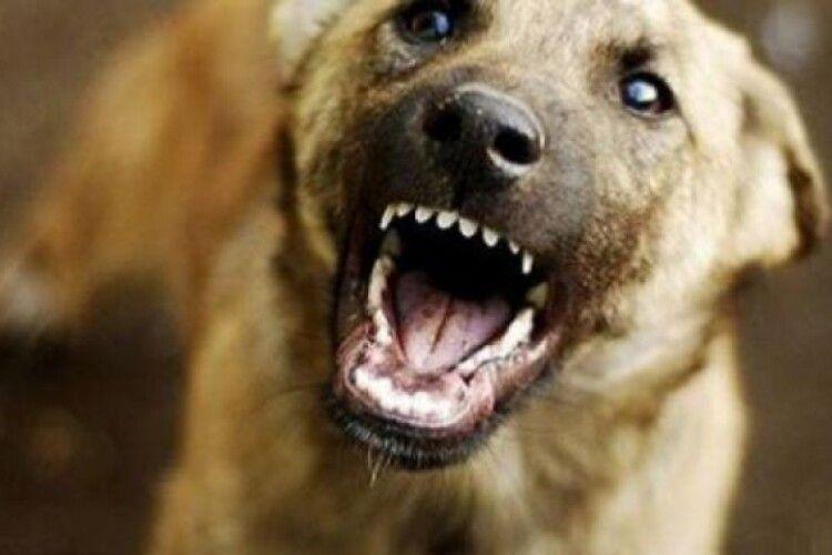 Майже 900 волинян звернулися до медиків через укуси тварин