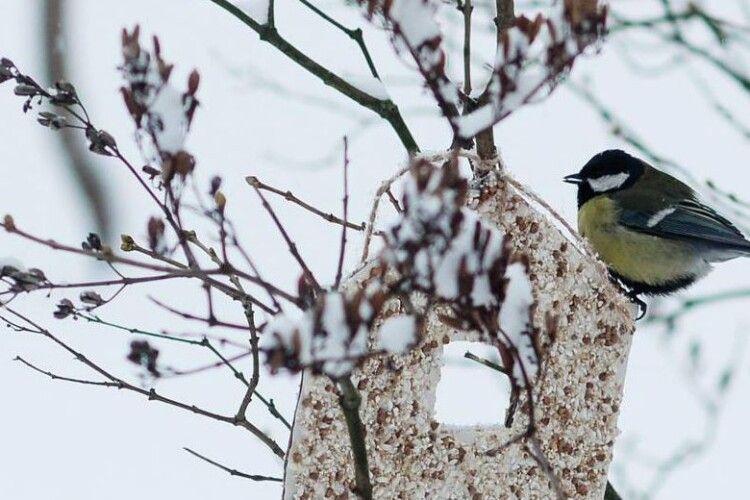 Хочете отримати подарунок від Національного природного парку «Прип'ять-Стохід»? Знімкуйте годівнички з пернатими