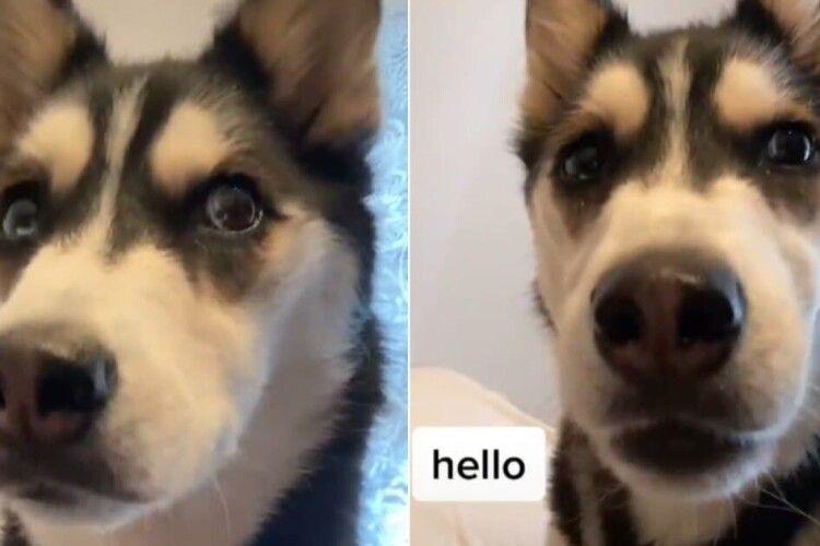 Розмовляє по-людськи: собака з унікальною здатністю стала зіркою інтернету (Відео)