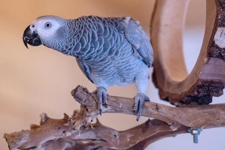 Скандал у Великій Британії: папуги почали матюжити відвідувачів парку дикої природи