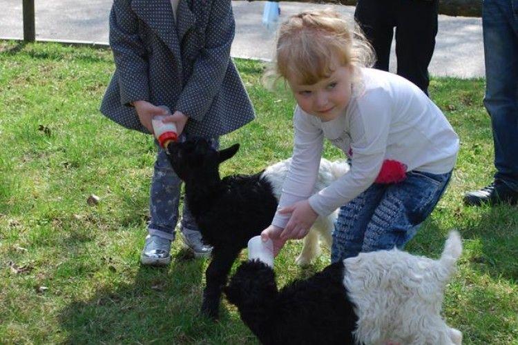 Рівненська малеча нагодувала молоком валлійських козенят (фото)
