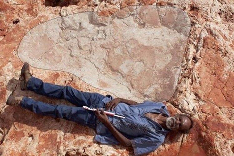 Вчені знайшли слід найбільшої живої істоти (фото)