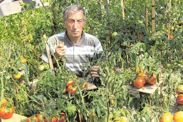 Диво-томати з Полісся