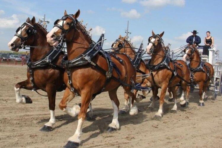 Зеленського просять заборонити експлуатацію коней в Україні