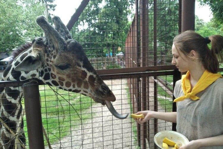Юннатка Мирослава змайструвала іграшку для жираф'ячого язика: аби у довгошиїх усе було гаразд із психікою (Фото)